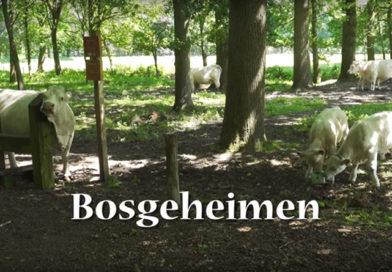 Bosgeheimen: het Nonnenland
