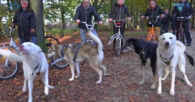 Sledehonden trainen in Groeneveld